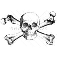 Vector Clipart Realistic Skull and Crossbones